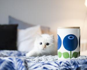 Kaffeburk 1,5 L med trälock, Blåbär (locket sitter lite löst)